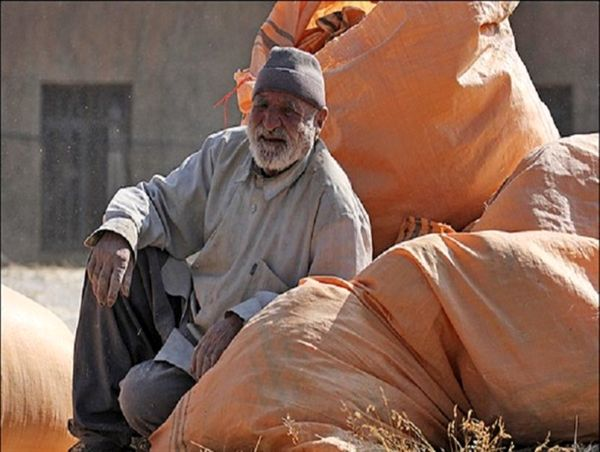 پرداخت 519 میلیارد ریال به گندمکاران مازندرانی