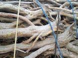 دستگیری 2 قاچاقچی چوب تاغ در ورامین
