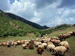 دامداران استان سمنان نسبت به تمدید پروانه چرای دام  اقدام کنند