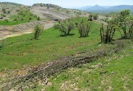 5 هزار متر مربع از اراضی ملی دماوند رفع تصرف شد
