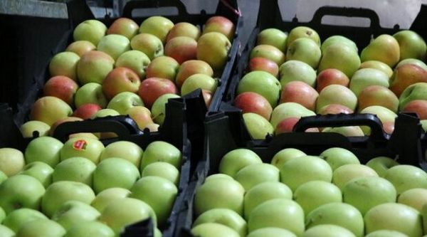 دولت بازار آشفته سیب سمیرم را ساماندهی کند