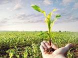 اجرای طرح یاوران تولید در سال زراعی جاری