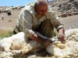 تولید بیش از هزارتن پشم در خراسان جنوبی
