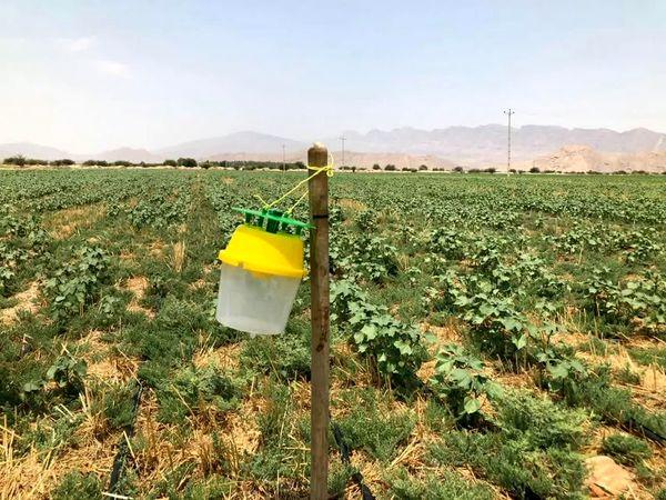 مبارزه بیولوژیک با آفات در ۸۵ هکتار از باغات چهارمحال و بختیاری