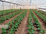 سهمیه 4.5 هکتاری برای توسعه گلخانههای خراسان جنوبی