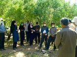 برگزاری دو دوره آموزشی ترویجی کشاورزی در شهرستان سامان