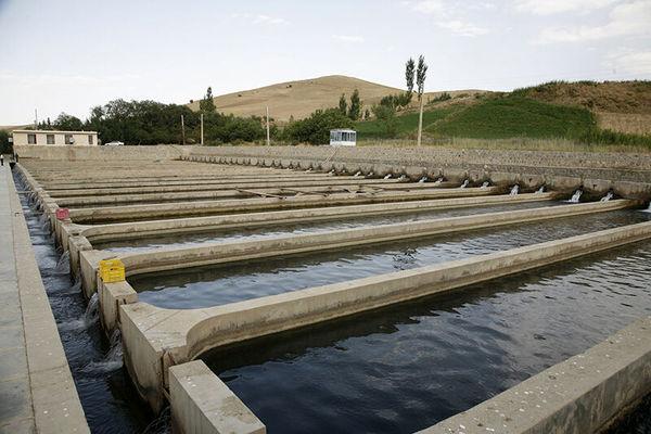 توسعه پرورش ماهی و آبزیان در شهرستان سراب