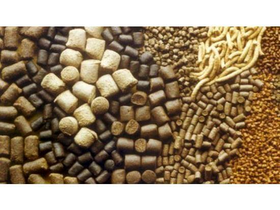 تولید 180 هزار تن خوراک دام و طیور در سوادکوهشمالی