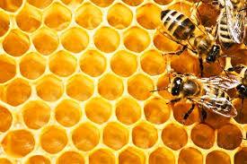 شرایط ممتاز استان بوشهر در تولید ملکه زنبورعسل