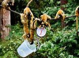 وزنکشی حیوانات باغوحش لندن