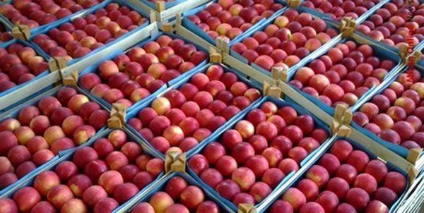 صادرات روزانه ۳ هزار تن سیب درختی از شهرستان ارومیه