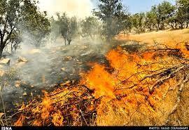 سوختن پنج هکتار از مراتع طبیعی ایلام در آتش