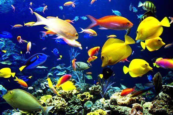 تولید یک میلیون قطعه ماهی زینتی در خراسان جنوبی