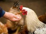 مصوبات کمیته ملی راهبردی بهداشت و تولیدات دامی در زمینه توزیع نهادهها برای مرغداریها، دامداریها و کارخانجات خوراک