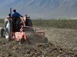 فریدن قطب تولید سیب زمینی در استان اصفهان