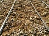 خشکه کاری برنج با رقم هستهای برای اولین بار در استان فارس