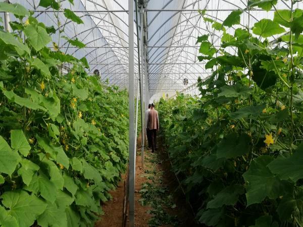 بهره برداری اولین گلخانه تجاری در گلوگاه