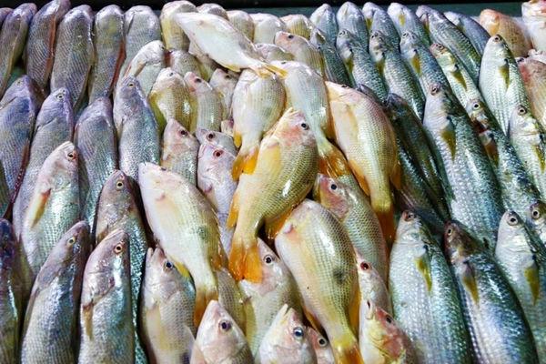 صادرات آبزیان 24 درصد افزایش یافت