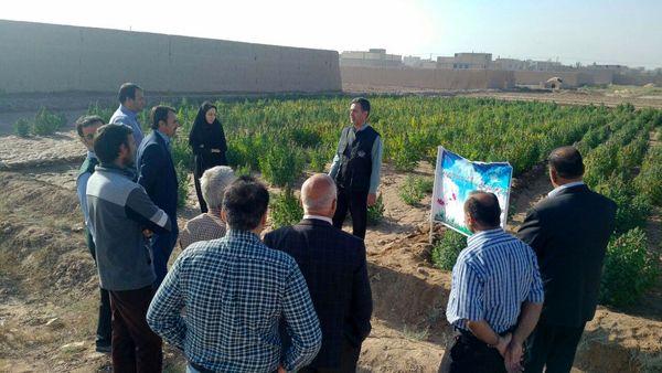 معرفی گیاه کینوا در برنامه روز مزرعه شهرستان یزد