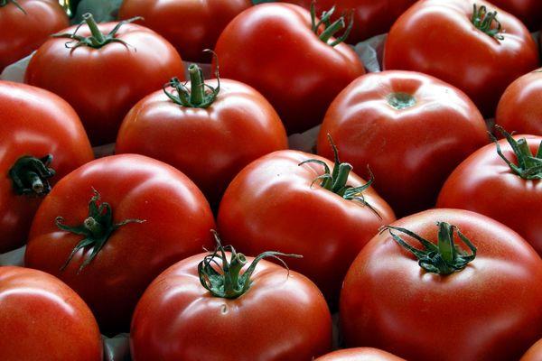 صادرات گوجه فرنگی به عراق و حوزه خلیج فارس