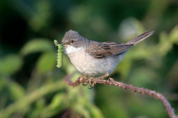 پرندگان مهاجر نمیتوانند خود را با بهار زودرس ناشی از تغییرات اقلیمی وفق دهند