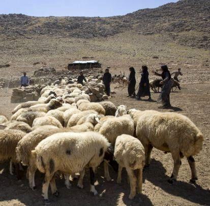 کاهش ۵۰ درصدی مصرف خوراک دام در خراسان شمالی
