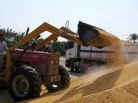ورود 250هزار تن نهاده دامی به کشور از بندر چابهار