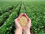تولید 650 تن سویا در بهشهر