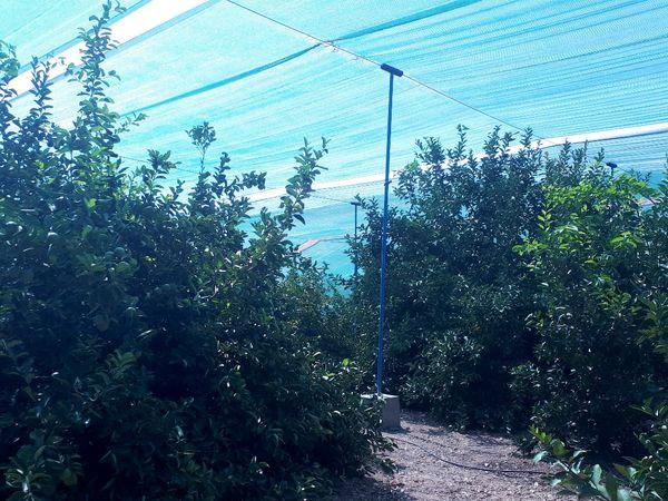 ایجاد سایبان باعث کاهش خسارت کشاورزی میشود