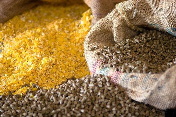 صادرات خوراک دام و طیور 43 درصد رشد کرد