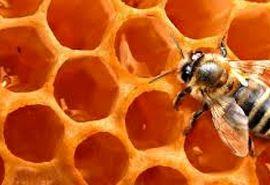 328 تن عسل در استان سمنان تولید شد