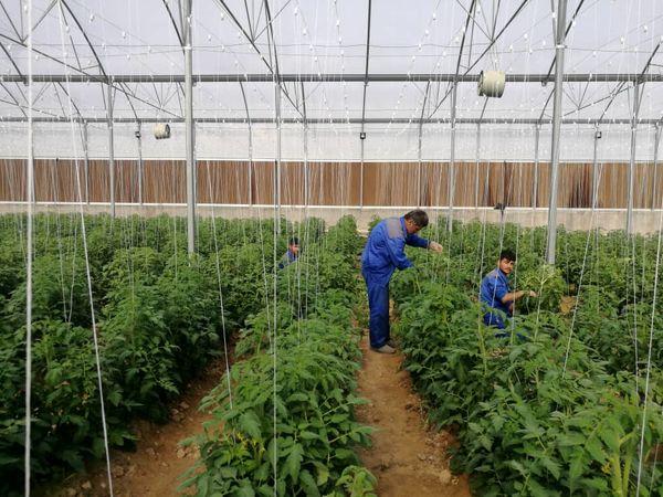 برگزاری نشست هماندیشی توسعه صنعت گلخانه در استان خوزستان