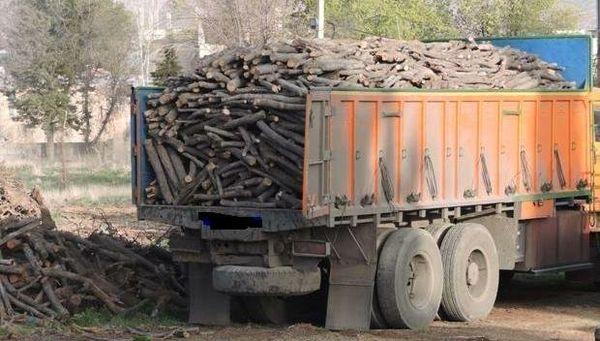 قاچاقچیان چوبهای تاغ شهرستان ورامین در دام مأموران منابع طبیعی افتادند