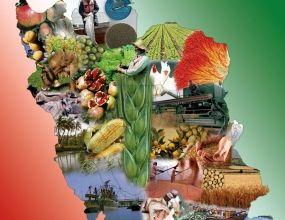 آمار تولید محصولات کشاورزی در سال 1397 اعلام شد
