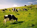 کشاورزی در ایرلند غنی و زیباست