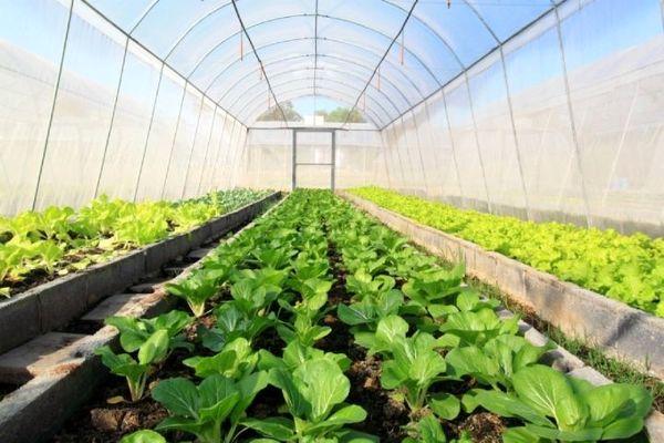 رشد 159 درصدی سطح گلخانههای کشور