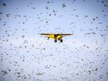 اختصاص 500 هزار دلار برای مقابله با ملخ صحرایی در ایران
