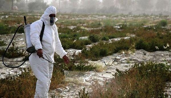 مبارزه با ملخ صحرایی در 2 هزار هکتار از اراضی کشور