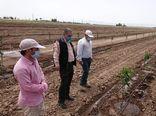 احداث باغ ۲۰ هکتاری مدرن در آبیک