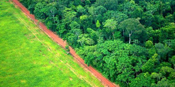 حفاظت از ۲۰ میلیون هکتار منابع طبیعی به مردم