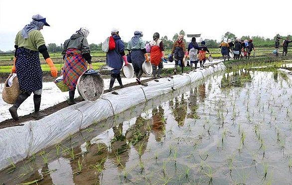 دورههای آموزشی زنان روستایی در قالب آموزشهای مهارتی برگزار میشود/ مخاطبان دورههای آموزشی تخصصی، زنان تسهیلگر، اعضای تعاونیها، صندوقهای اعتبارخرد و زنان کارآفرین و تولیدکننده هستند