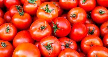 گواهی محصول سالم برای گوجه فرنگی مرودشت صادر شد
