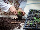 شهرستان شهرکرد پیشتاز در تولید پایههای گل زینتی