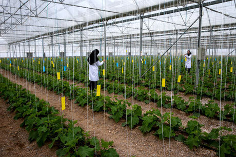 زنان کشاورز در کاهش مصرف انرژی موثر هستند