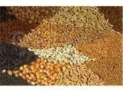 تأمین ده هزار تُن بذر غلات در خراسان شمالی