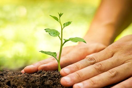 در شهرکرد هر نوزاد صاحب یک درخت می شود