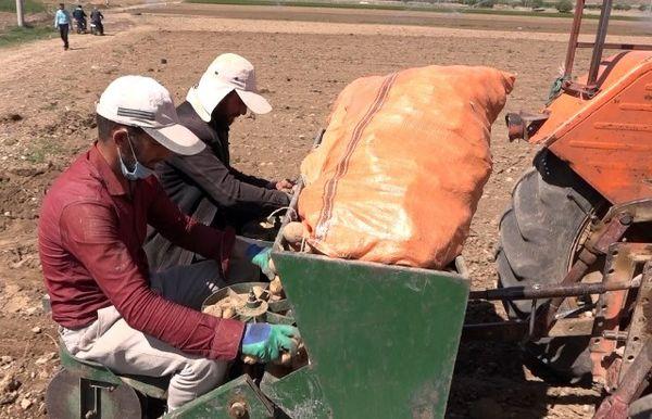 آغاز کشت سیب زمینی در مزارع شهرستان فریدن