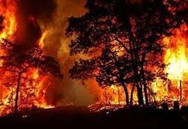 آتش در زاگرس دوباره جان گرفت