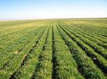 کشاورزان مشخصات خود در سامانه جامع پهنه بندی ثبت کنند