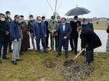 کاشت ۲۲۰ هزار اصله در آذربایجان غربی همزمان با هفته منابع طبیعی